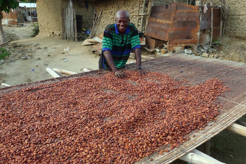 Harvesting The Cocoa Bean I Love My Job At Lake