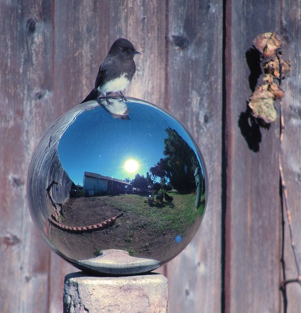 bird sits atop smooth mirrored globe reflecting sunlight, a split-level ranch, and sparse yard
