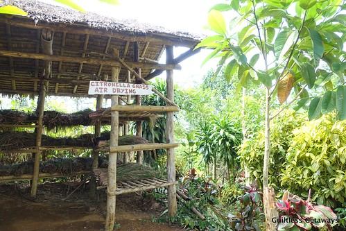 farming-bukidnon.jpg