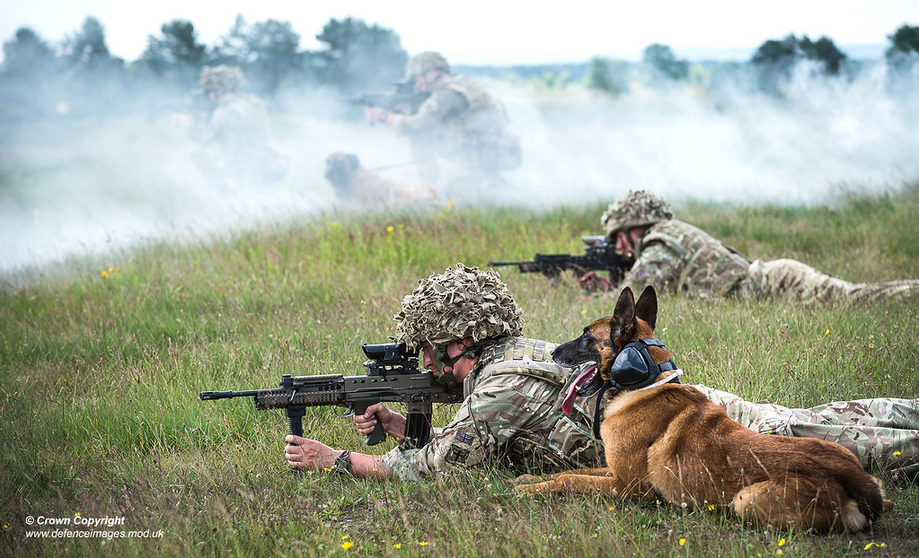 Training Dogs For Defence