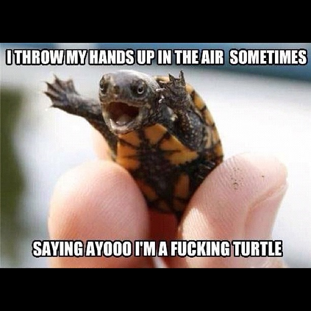 i throw my hands up in the air sometimes saying