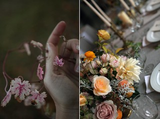 roses_autumn5 | by Sarah Ryhanen