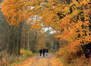 Autumn Promenade | by Steffe