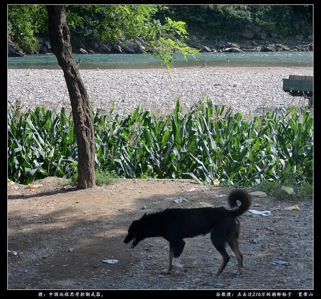 DPRK,North Korea | 朝鲜平安南道某地,河里还有孩子游泳。谷歌搜:上海木头。 | yuhong Chen | Flickrnew icn messageflickr-free-ic3d pan white