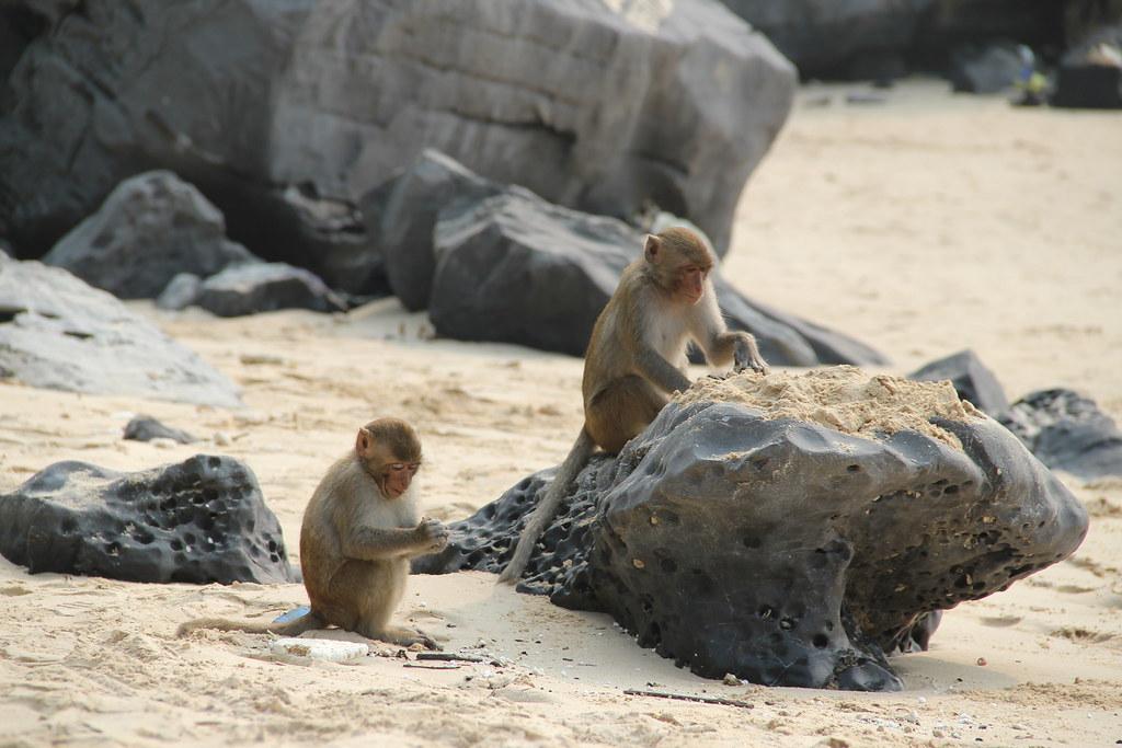 Monkey Island Se Clasdic Edition Dialoge