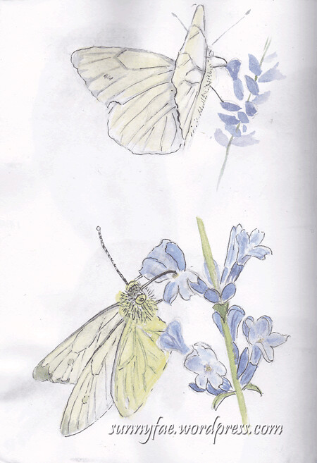 cholmondeley-butterfly-sketches