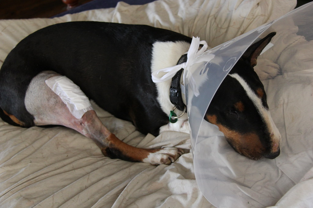 Dog Bandage For Paw Cut