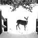deer bridge