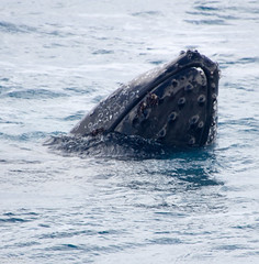 seals-orcas-whales-dolphins-24