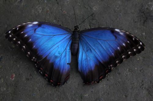 Butterfly world st albans fireworks 2012