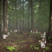 Misty Path Through Woods