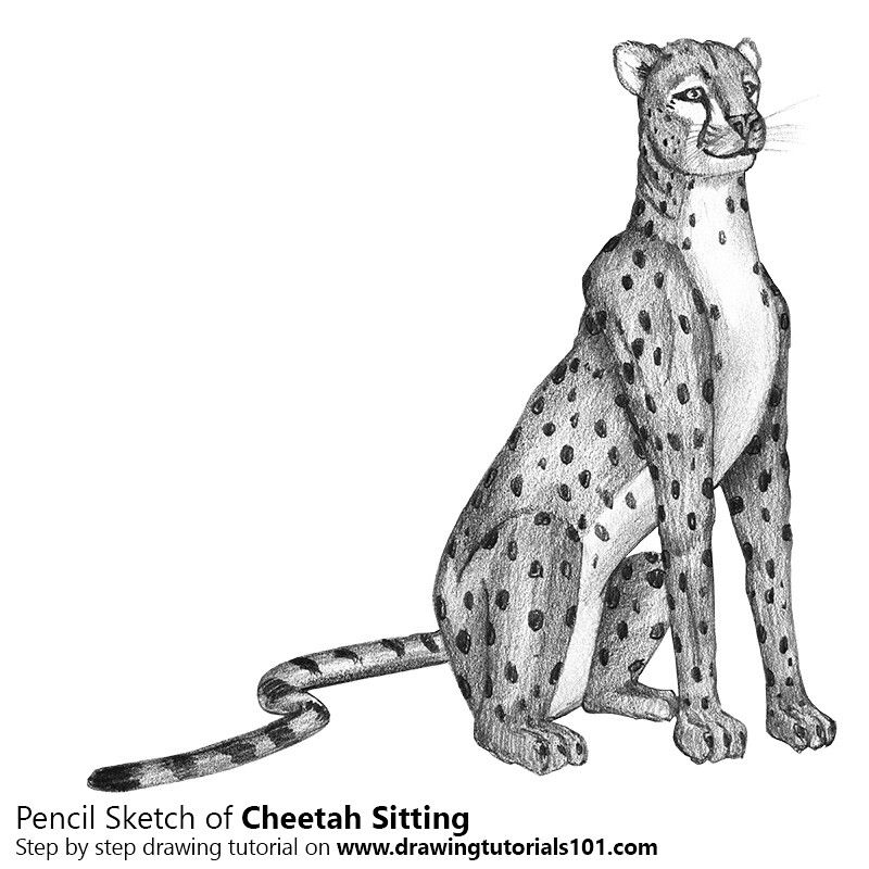 How to draw a cheetah face step by step