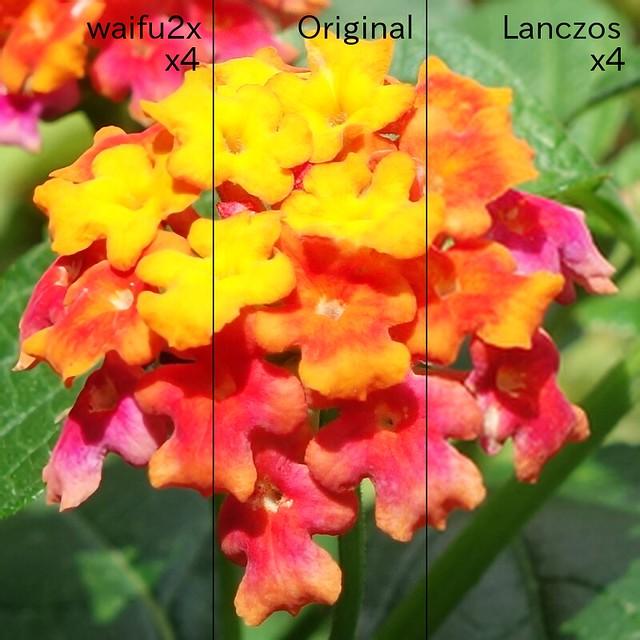"""Lantana_Comparison_1_Text """"waifu2x"""" で2回2倍に拡大した画像と元の画像とLanczosで2回2倍に拡大した画像との比較画像。ランタナの花の写真を横に3等分して比較している。"""