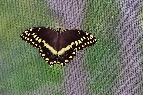 Image result for butterfly on a screen