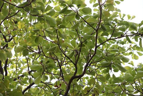 ecosystem/flora/Baheda...