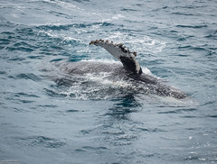 seals-orcas-whales-dolphins-14