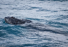 seals-orcas-whales-dolphins-22