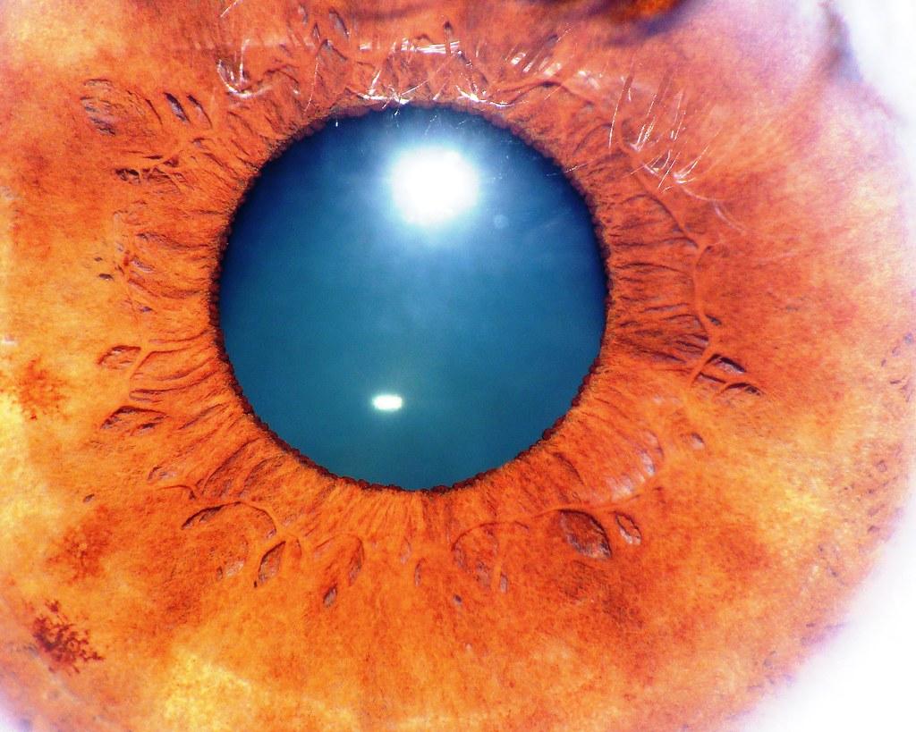 Niezwykłe zbliżenie na oko ludzkie