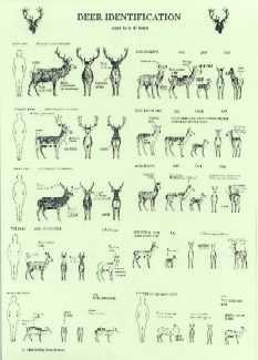 deer identification sheet _bds_ | nikkitom | Flickr