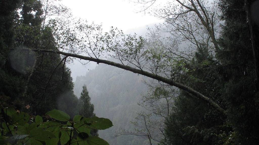 1011209_47_檜山巨木群步道
