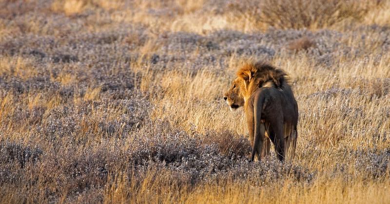 king of namibia