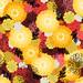 marigold_lindsaynohl_sm