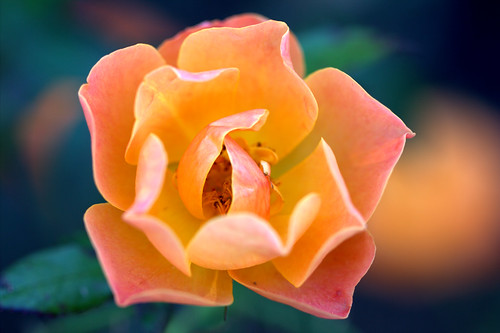 Quot It Is At The Edge Of A Petal That Love Waits Quot William C Flickr