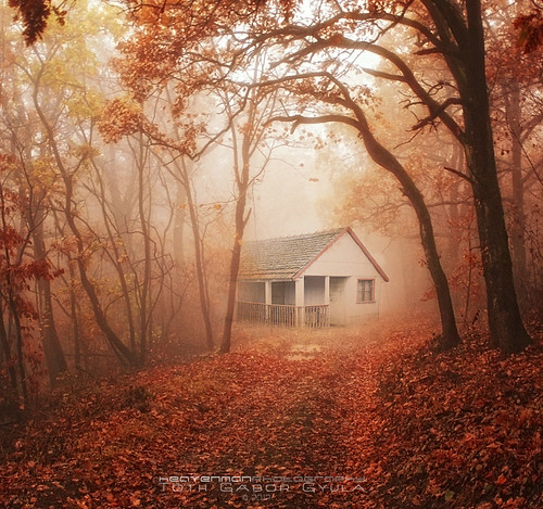 Old house in the forest follow me on facebook prints for Classic house follow me