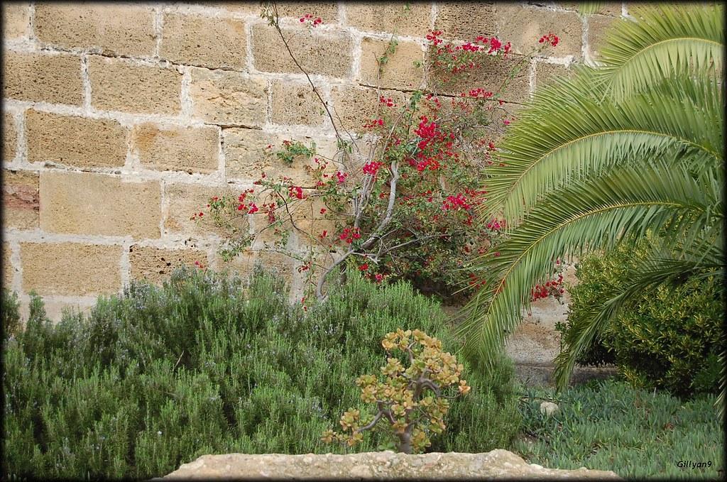 carmona espagne petit jardin m diterran en gillyan9 flickr. Black Bedroom Furniture Sets. Home Design Ideas
