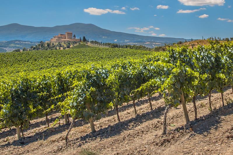 Rioja Vineyard