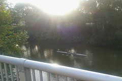 Scullers in the morning