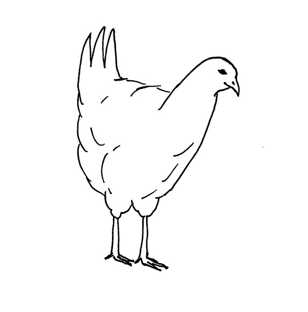 Line Drawing Chicken : Line drawing of a chicken flickr photo sharing