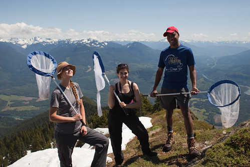 Cascades Butterfly Project Team | by North Cascades National Park