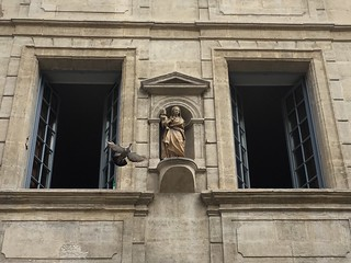 Pigeon taking flight from Avignon windowsill | by Kate Wirth