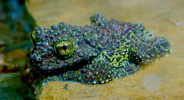 Mossy Frog_1
