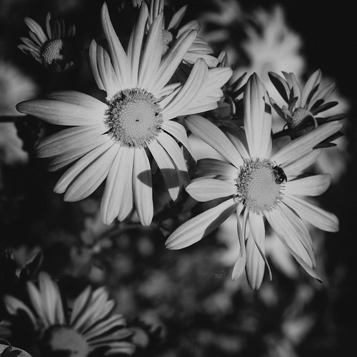 Monochrome Flowers | by laguglio