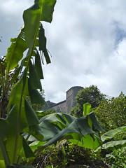 Parc national historique - Citadelle, Sans-Souci, Ramiers