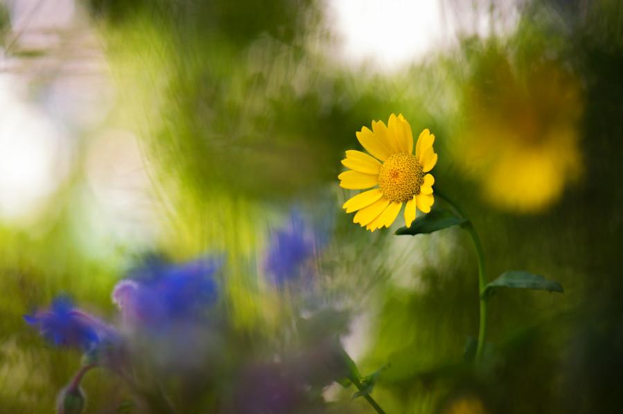 Photograph A Final Flourish