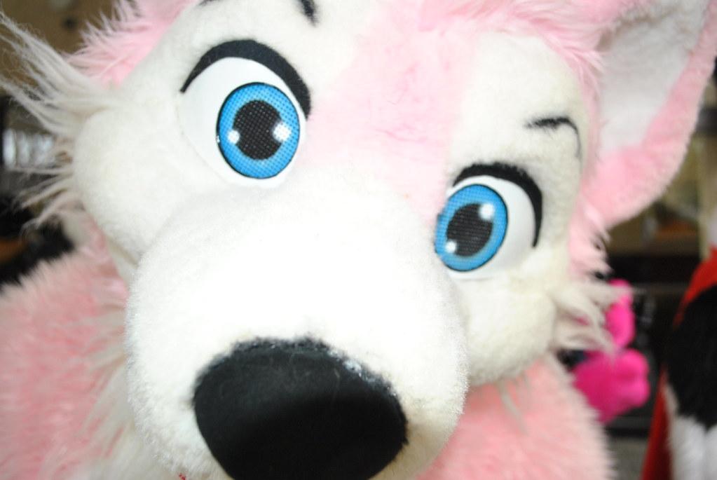 Pink Husky Face Douglas Muth Flickr