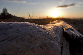 sparkle driftwood | by fog and swell