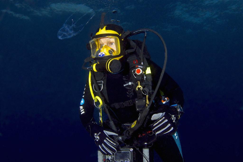 angel yanagihara jellyfish research university of hawaii a flickr