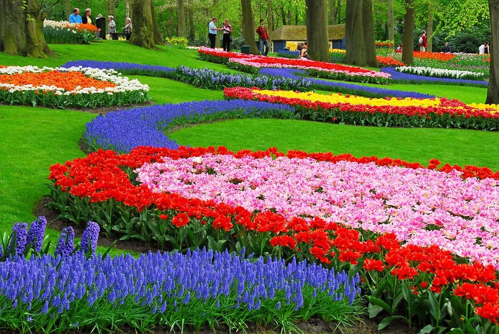 Gambar Pemandangan Taman Bunga Foto Bunga Tulip Flower Gar Flickr