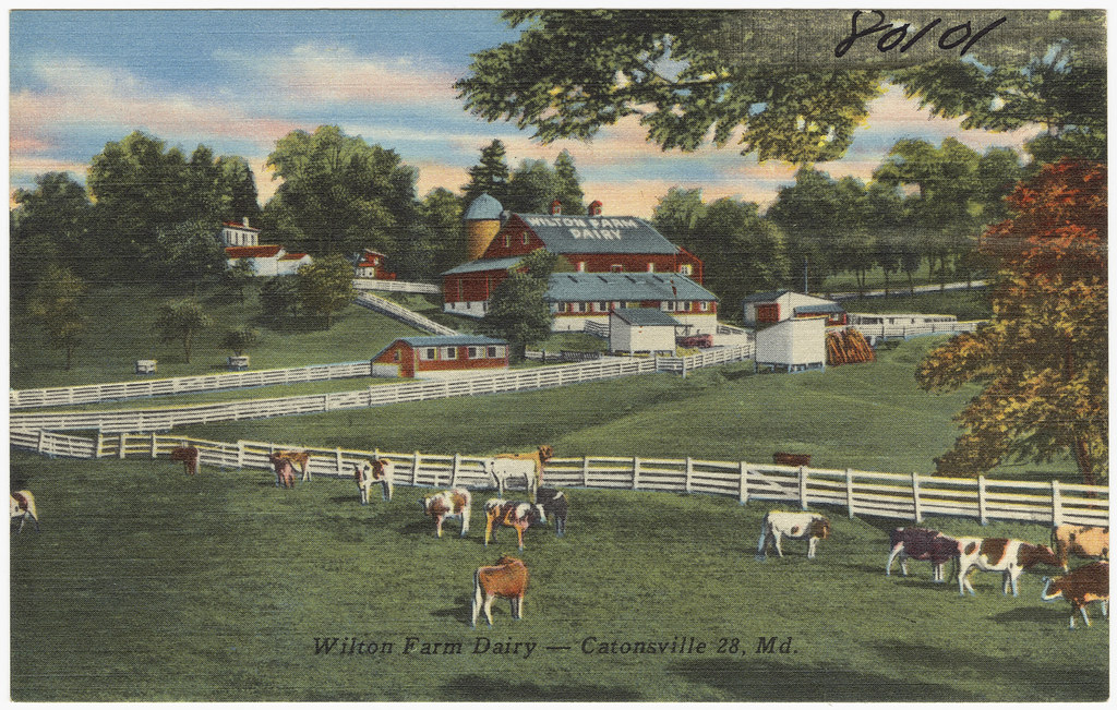 wilton farm dairy