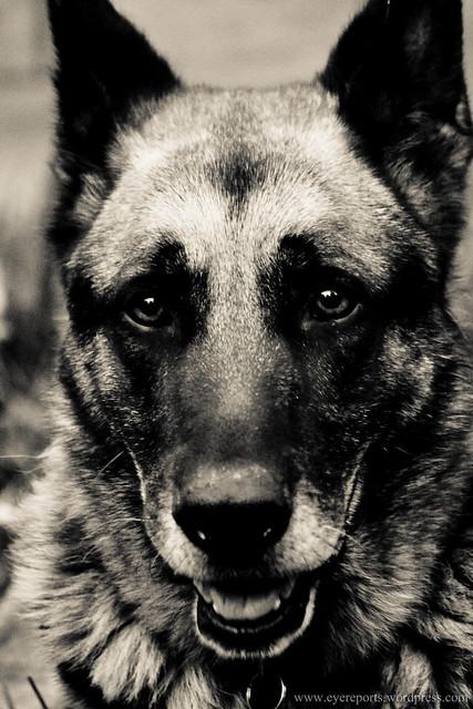 Kennel Cough Dog Doxycyline Dose