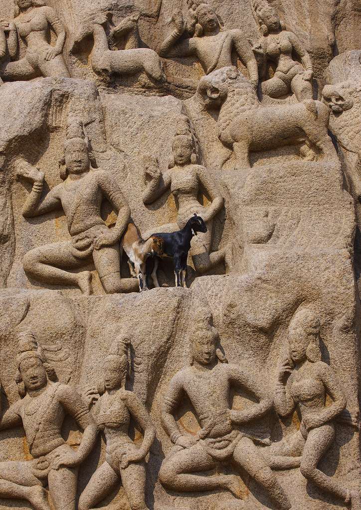 Real goats perched on arjuna s penance carvings mahabalipu