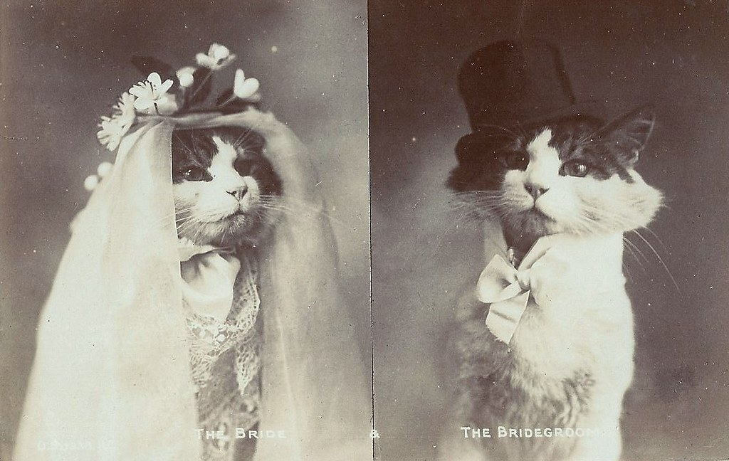 cat wedding edwardian postcard depicting a cat wedding