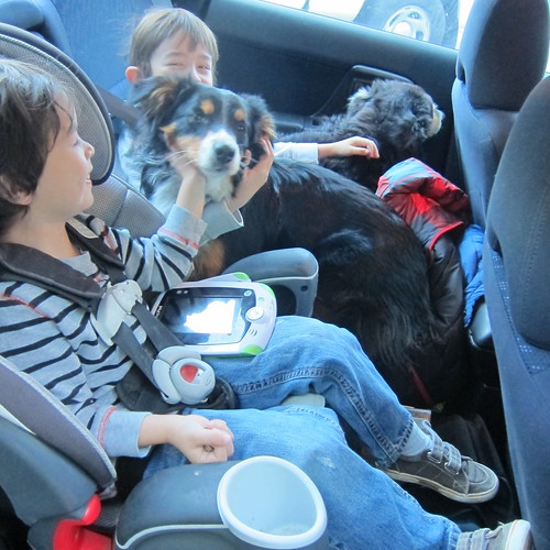 2 kids, 2 dogs and a cat all packed in the backseat | by originallittlehellraiser