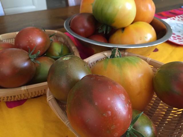 Surplus tomatoes