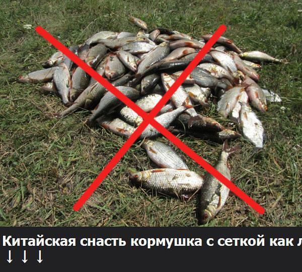 Китайская снасть кормушка с сеткой как ловить? | Рыбу хотят … | Flickr