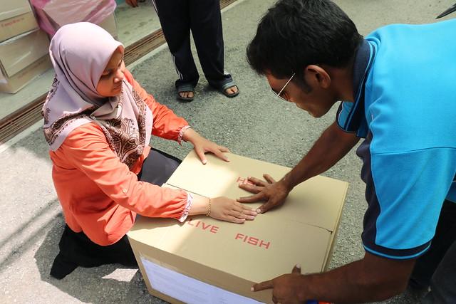 Packing box of GIFT fry, Jitra, Malaysia. Kate Bevitt, 2016.